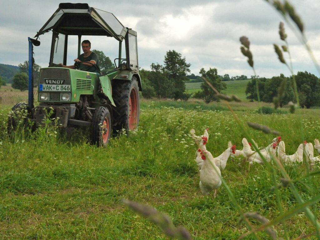Traktor mit Hühner auf Wiese